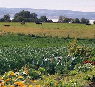 Biodiversity-on-an-organic-farm